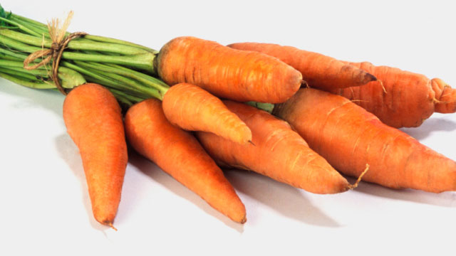 Carrots for dogs