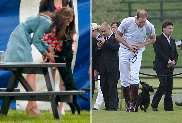 William and Catherine showered their new puppy with love.