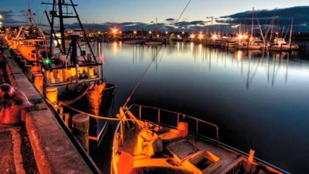 Napier's Inner Harbour at night
