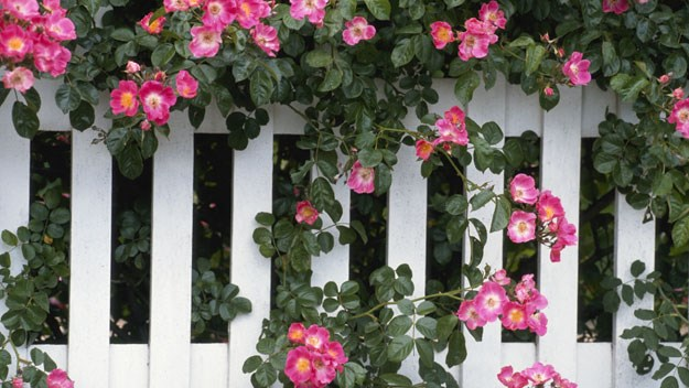 Transform your fence from dull to dazzling