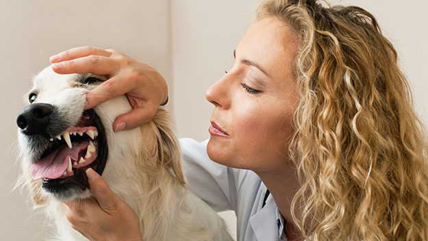 Dental health care for your family pet