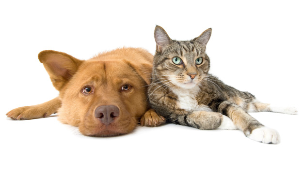 Cats are con artists, dogs are brown-nosers