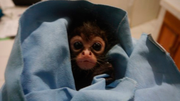 Meet the world's cutest baby monkey