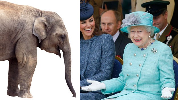 Gift fit for a queen? An elephant, apparently
